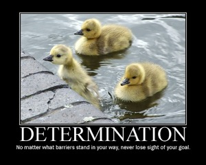 don't let the haters stop you from being this duck